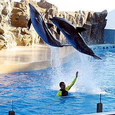 Most Hong Kongers have fond childhood memories of the aquatic theme park, Ocean Park. It was built by the omnipresent Hong Kong Jockey Club on 170 hilly acres overlooking the sea just east of Aberdeen.
