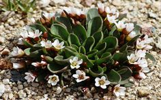 Alpine plants are low maintenance