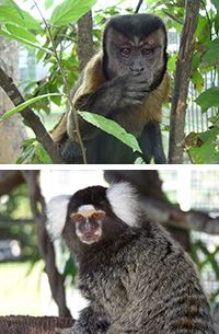 Feed a Retired Lab Monkey for a Month at The Rainforest Site