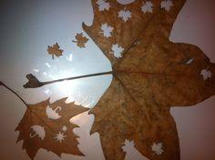 Taladros en hojas secas de otoño, ideal para  decorar albumes, scrapbooking