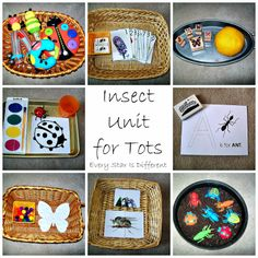 Insect Unit for Tots via Every Star Is Different!