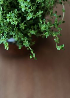 17 Recipes that use Thyme 17 recip