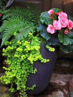 partial shade....tassel fern, begonia, creeping jenny