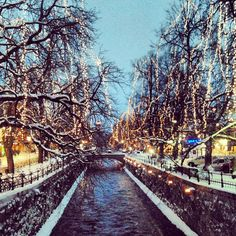 Christmas in Uppsala, Sweden. Ahhh, I can't wait. I want Christmas so bad!