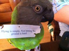 Weegee, my sister's Senegal parrot.