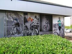 Madison Cycles – window graphics Milton Keynes