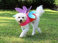 Their favorite jacket and a few inexpensive craft materials are all you need to magic up a (cute!) winged Halloween pet costume for your pup.