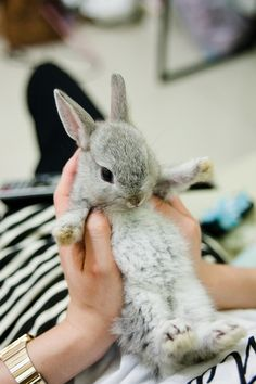 My next pet will be a tiny bunny