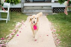 Sweet Ways to Include Your Dog in Your Wedding
