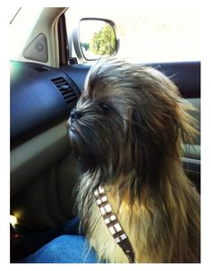 chewbacca dog. this made me laugh!