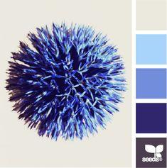 flora blue via design seeds