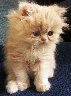 Soft kitty, warm kitty, little ball of fur....