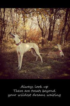 Greyhound Dog Photo art card 5x7 Look up by GreytLifeCards on Etsy, $4.00