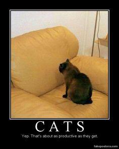 Cats - Demotivational Poster