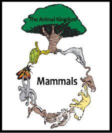 Free Mammals Lapbook