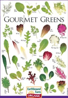 Types of lettuce | Salads | Pinterest