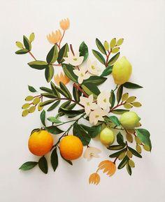 citrus and citrus colored flowers