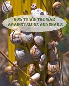 How to Win the War Against Slugs and Snails