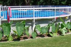 above ground pool backyard ideas | Pictures of Backyard Landscape Designs - above ground swimming pool ...