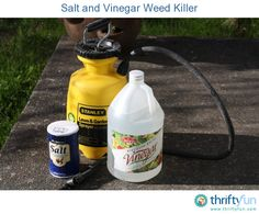 Natural weed killer solution: 1 gallon vinegar, 2 cups of salt, 1 tsp. dish soap.   Great for killing the weeds in the driveway - not so much in the grass or flower beds as it makes an unfavorable growing environment not only for the weeds but everything.