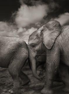 Photograph: Joachim Schmeisser/David Sheldrick Wildlife Trust