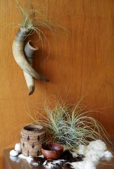 From the new book AIR PLANTS by Zenaida Sengo. Photo by Caitlin Atkinson.
