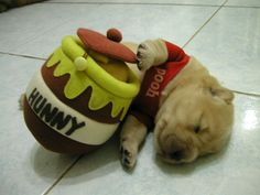 puppy costumes winnie pooh dogs puppies