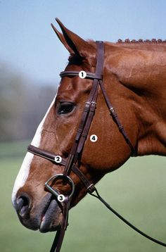 Fit a Hunter Bridle | Practical Horseman