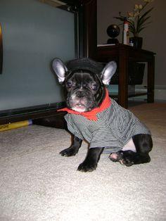 Dog Halloween Costume Contest: Capone