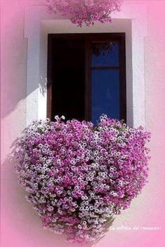 Heart-shaped flowering plant in a window box
