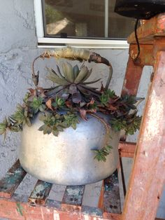 Old tea pot for my succulent