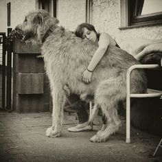 """""""I would love to have an Irish Wolfhound!"""""""