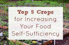 Top 5 Crops for Increasing Food Self Sufficiency - Five Little Homesteaders