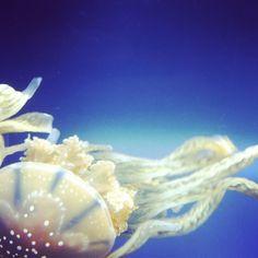 Aquarium love