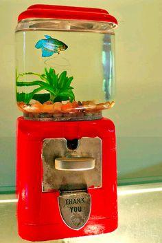 DIY Gumball Machine Fish Tank....