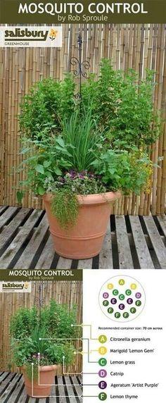 Mosquito repellant container garden!