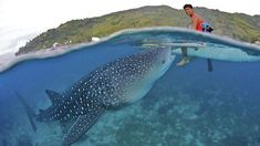 surfing with whale shark