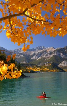 autumn, alberta canada, provinci park, valley provinci, bows, beauti, bow valley, countri, barrier lake