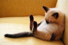 omg...cutie pie, is she asleep?!