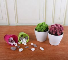 Desert Gems cacti look fabulous in white pots, but accent other colors, too!