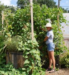 Keyhole style garden