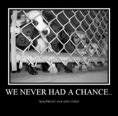 Please spay and neuter your pets ~