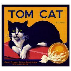 Orosi Tom Cat Orange Citrus Fruit Crate Box Label Art Print ❤ liked on Polyvore vintag, cats, lemons, fruit, tomcat, crate label, art, tom cat, crates