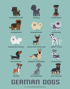 GERMAN DOGS art print dog breeds from Germany by doggiedrawings