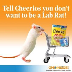 Tell Cheerios You Dont Want To Be A Lab Rat! https://www.facebook.com/Cheerios