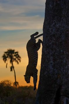 Photo Sunrise descent by Marc MOL on 500px