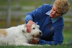 By Amy Snow & Nancy Zidonis, Founders of Tallgrass Animal Acupressure Institute WHAT'S THE DIFFERENCE between Dog Acupressure & Acupuncture