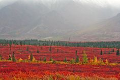 Parks Highway in the fall time. Alaska.
