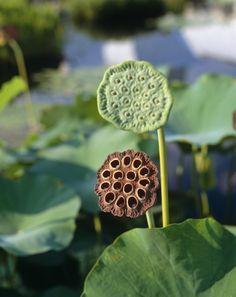 /\ /\ . Lotus pod