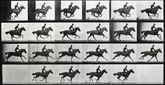 """The horse galloping"" from Animal Locomotion (1887) by Eadweard Muybridge. Rijksmuseum (Public Domain) http://blog.europeana.eu/2012/04/the-science-of-movement-eadweard-muybridge/"